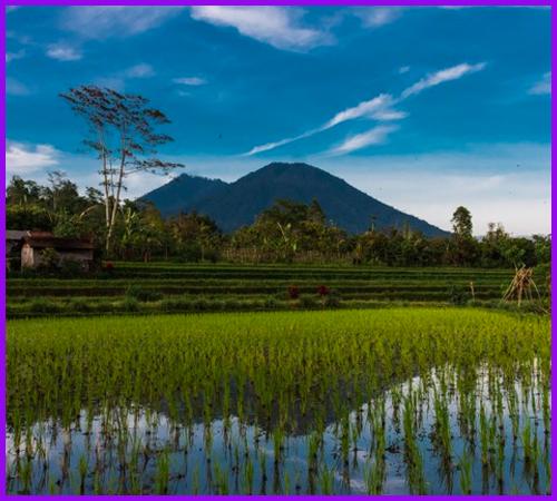 Bali 1.7