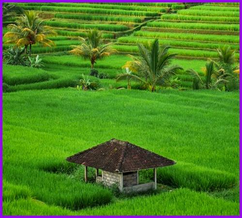 Bali 1.8